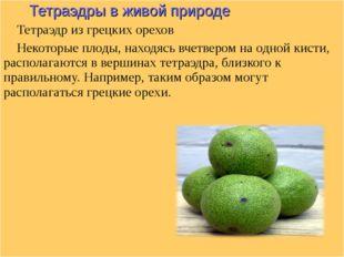 Тетраэдры в живой природе Тетраэдр из грецких орехов Некоторые плоды, находя
