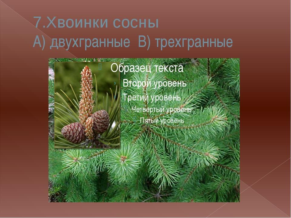 9. На стволе березы растет гриб А) чага В) подберезовик