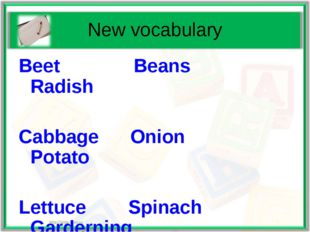 New vocabulary Beet Beans Radish Cabbage Onion Potato Lettuce Spinach Gardern