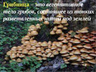 Грибница – это вегетативное тело грибов, состоящее из тонких разветвленных н