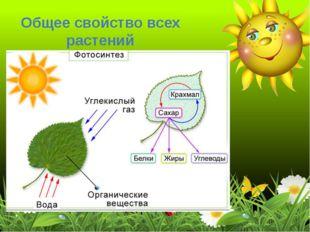 Общее свойство всех растений