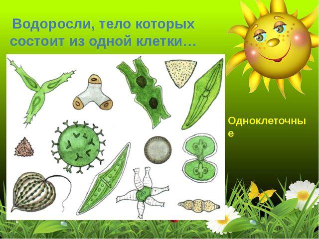 Водоросли, тело которых состоит из одной клетки… Одноклеточные