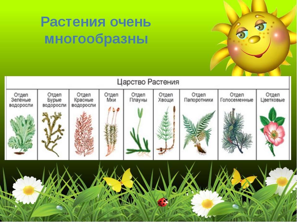 Растения очень многообразны