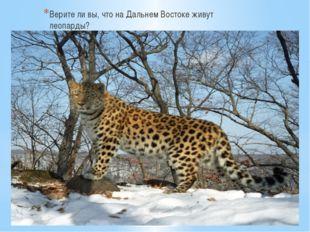 Верите ли вы, что на Дальнем Востоке живут леопарды?