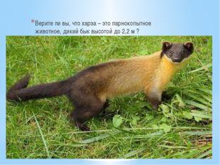 Верите ли вы, что харза – это парнокопытное животное, дикий бык высотой до 2