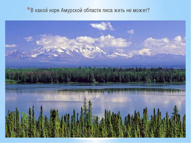 В какой норе Амурской области лиса жить не может?