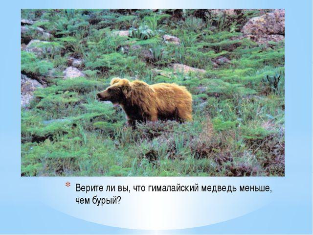 Верите ли вы, что гималайский медведь меньше, чем бурый?