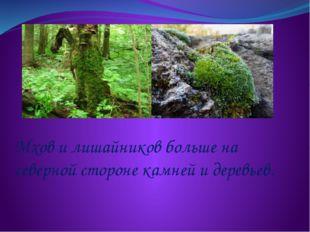 Мхов и лишайников больше на северной стороне камней и деревьев.
