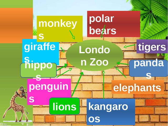 London Zoo pandas hippos lions penguins giraffes monkeys polar bears tigers e...