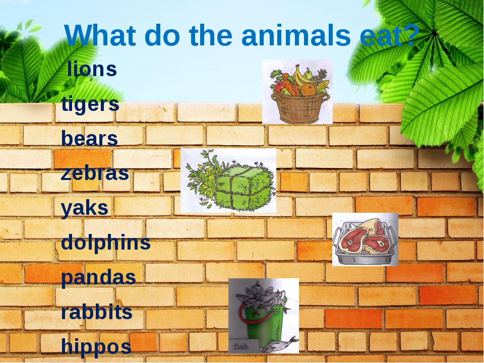 What do the animals eat? lions tigers bears zebras yaks dolphins pandas rabbi...