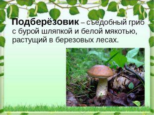 Подберёзовик – съедобный гриб сбурой шляпкой ибелой мякотью, растущий вбе