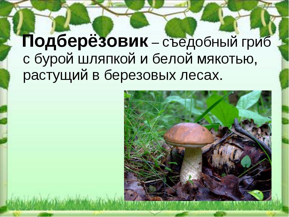 Подберёзовик – съедобный гриб сбурой шляпкой ибелой мякотью, растущий вбе...