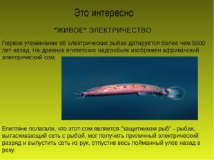 """""""ЖИВОЕ"""" ЭЛЕКТРИЧЕСТВО Первое упоминание об электрических рыбах датируется бол"""