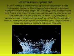 Рыбы с помощью электрических органов обнаруживают в воде посторонние предметы