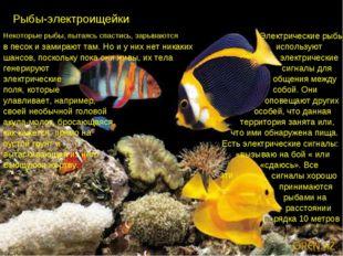 Рыбы-электроищейки. Некоторые рыбы, пытаясь спастись, зарываются Электричес
