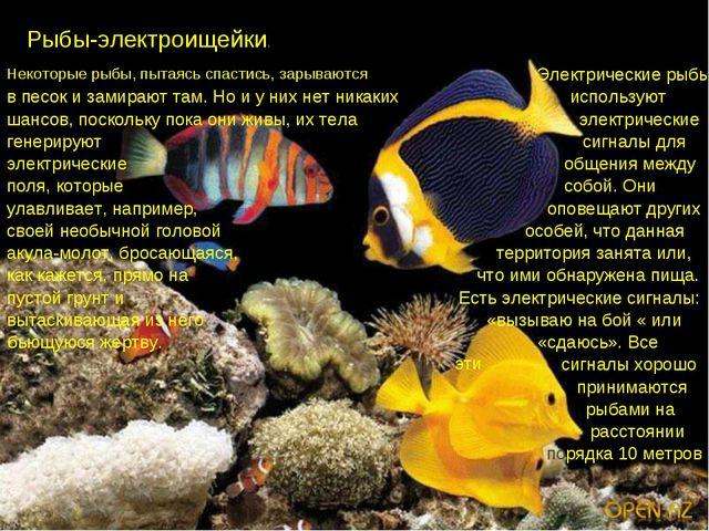 Рыбы-электроищейки. Некоторые рыбы, пытаясь спастись, зарываются Электричес...