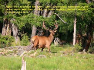 Удивителен животный мир Урала. Здесь сохранилось множество редких экземпляров