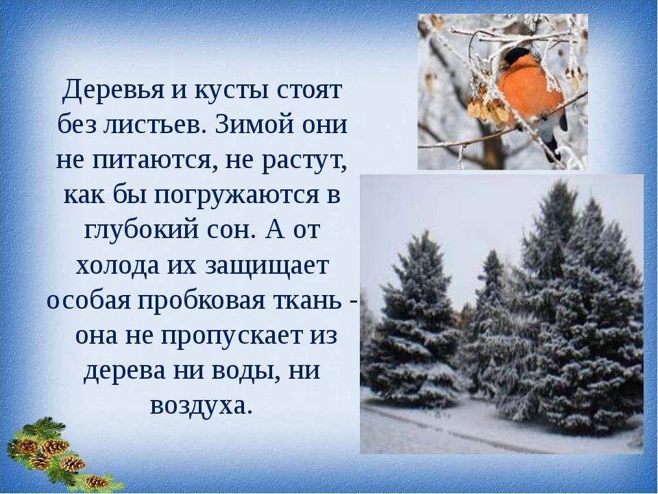 Деревья и кусты стоят без листьев. Зимой они не питаются, не растут, как бы п...