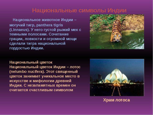 Национальное животное Индии – могучий тигр, panthera tigris (Linnaeus). У не...