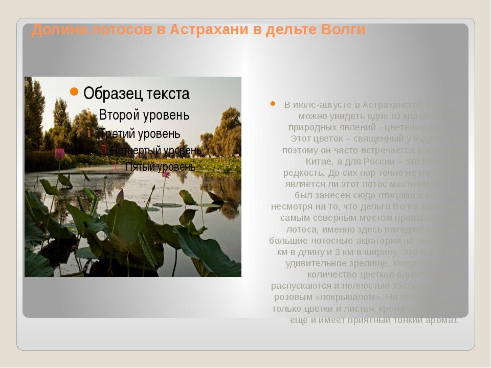 Долина лотосов в Астрахани в дельте Волги В июле-августе в Астраханской облас...