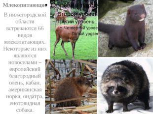Млекопитающие В нижегородской области встречаются 66 видов млекопитающих. Не