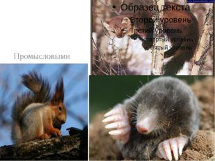 Промысловыми животными являются в основном белки, лисицы, куницы, кроты, ено