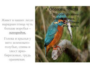 Живет в наших лесах нарядная птица чуть больше воробья – зимородок. Голова и