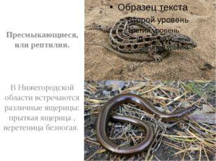 Пресмыкающиеся, или рептилии. В Нижегородской области встречаются различные