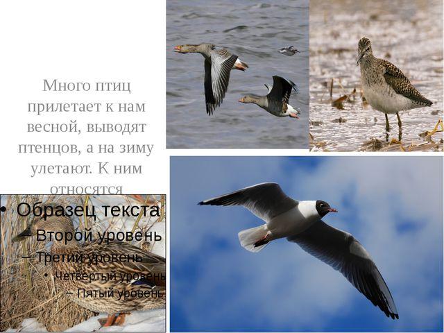 Много птиц прилетает к нам весной, выводят птенцов, а на зиму улетают. К ним...