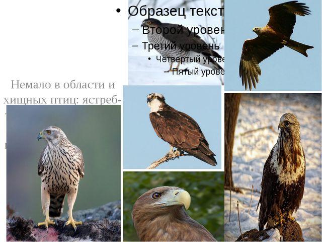 Немало в области и хищных птиц: ястреб-тетеревятник, ястреб-перепелятник, ко...