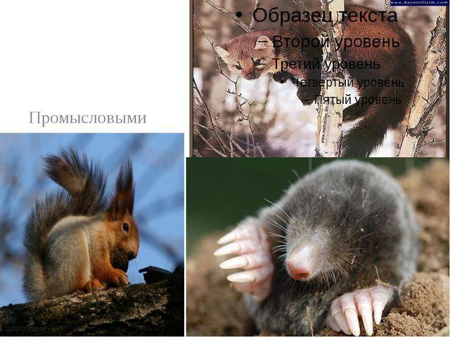 Промысловыми животными являются в основном белки, лисицы, куницы, кроты, ено...