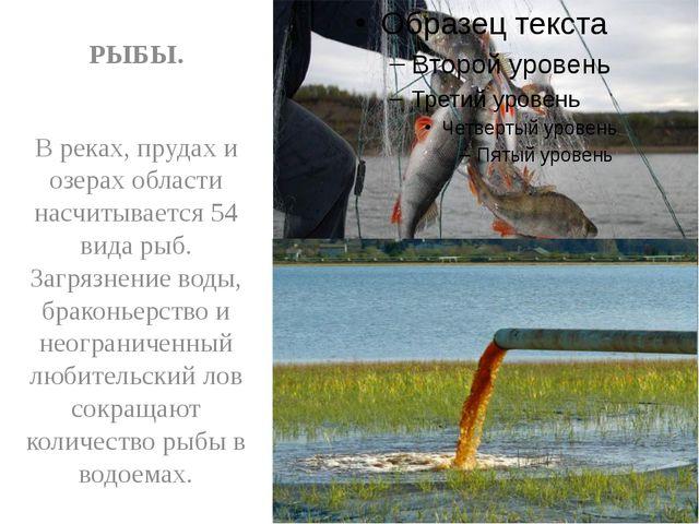 РЫБЫ. В реках, прудах и озерах области насчитывается 54 вида рыб. Загрязнени...