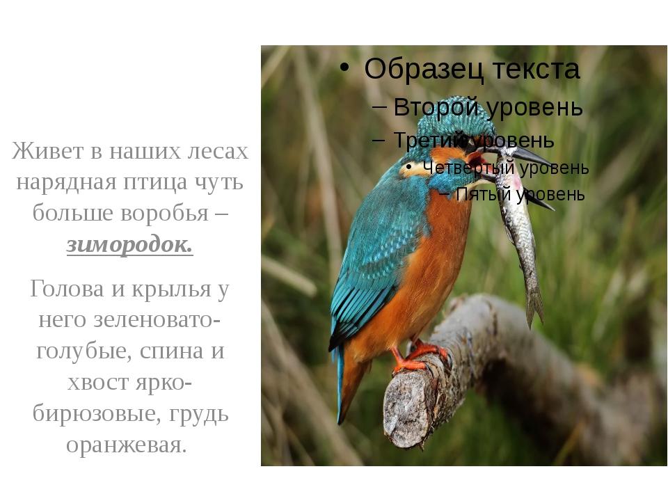 Живет в наших лесах нарядная птица чуть больше воробья – зимородок. Голова и...