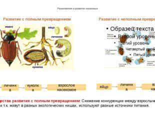Размножение и развитие насекомых Развитие с полным превращением Развитие с не