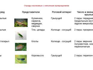 Отряды насекомых с неполным превращением Отряд Представители Ротовой аппарат