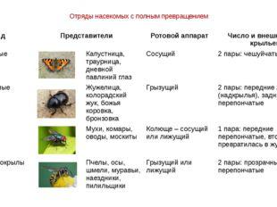 Отряды насекомых с полным превращением Отряд Представители Ротовой аппарат Чи
