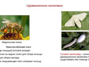 Одомашненные насекомые Медоносная пчела Тутовый шелкопряд – полностью одомашн