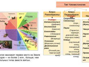 Тип Членистоногие Класс Ракообразные Класс Паукообразные Класс Насекомые Отря