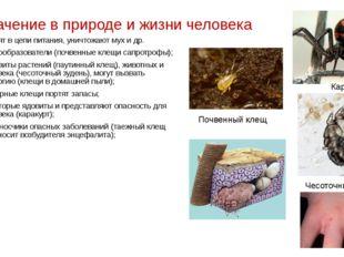 Значение в природе и жизни человека Входят в цепи питания, уничтожают мух и д