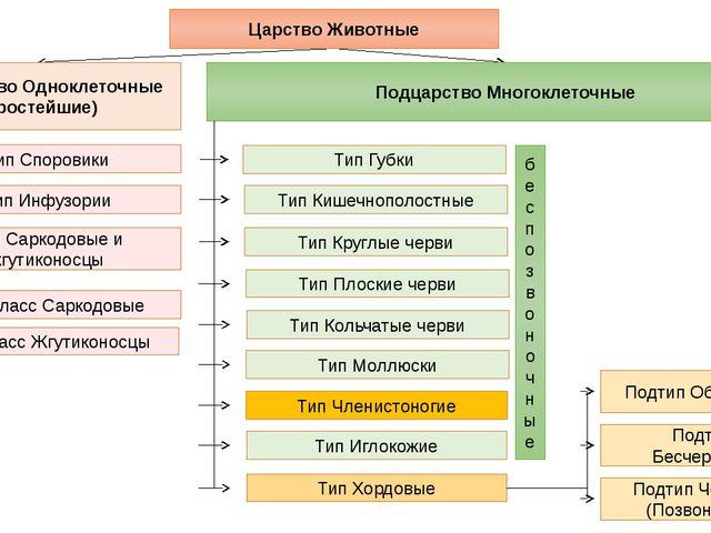 Подцарство Одноклеточные (Простейшие) Подцарство Многоклеточные Тип Саркодовы...