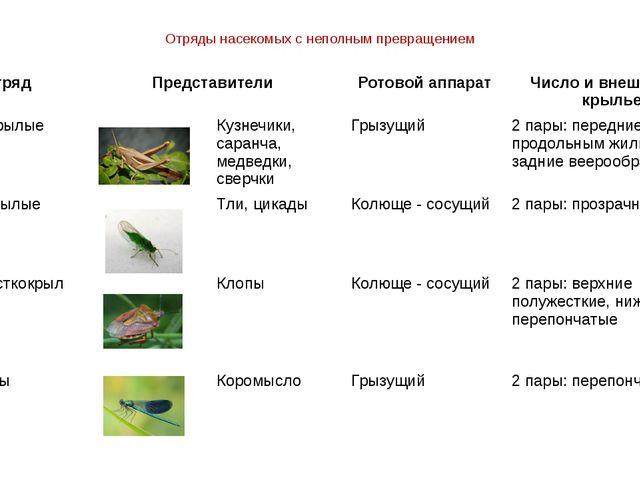 Отряды насекомых с неполным превращением Отряд Представители Ротовой аппарат...