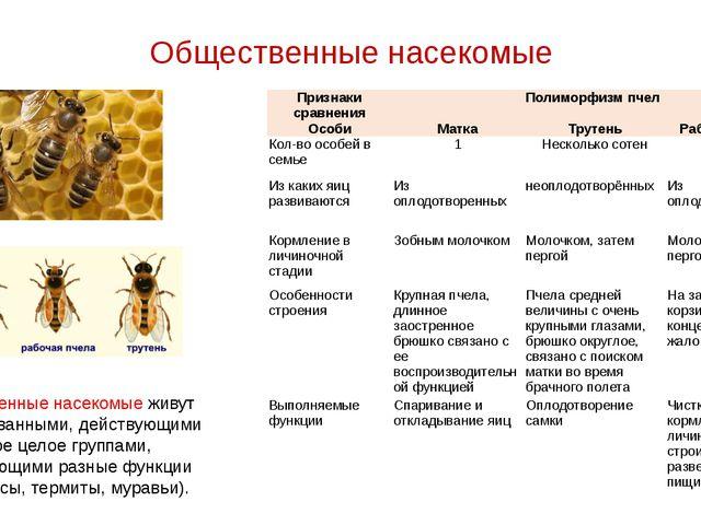 Общественные насекомые Общественные насекомые живут организованными, действую...