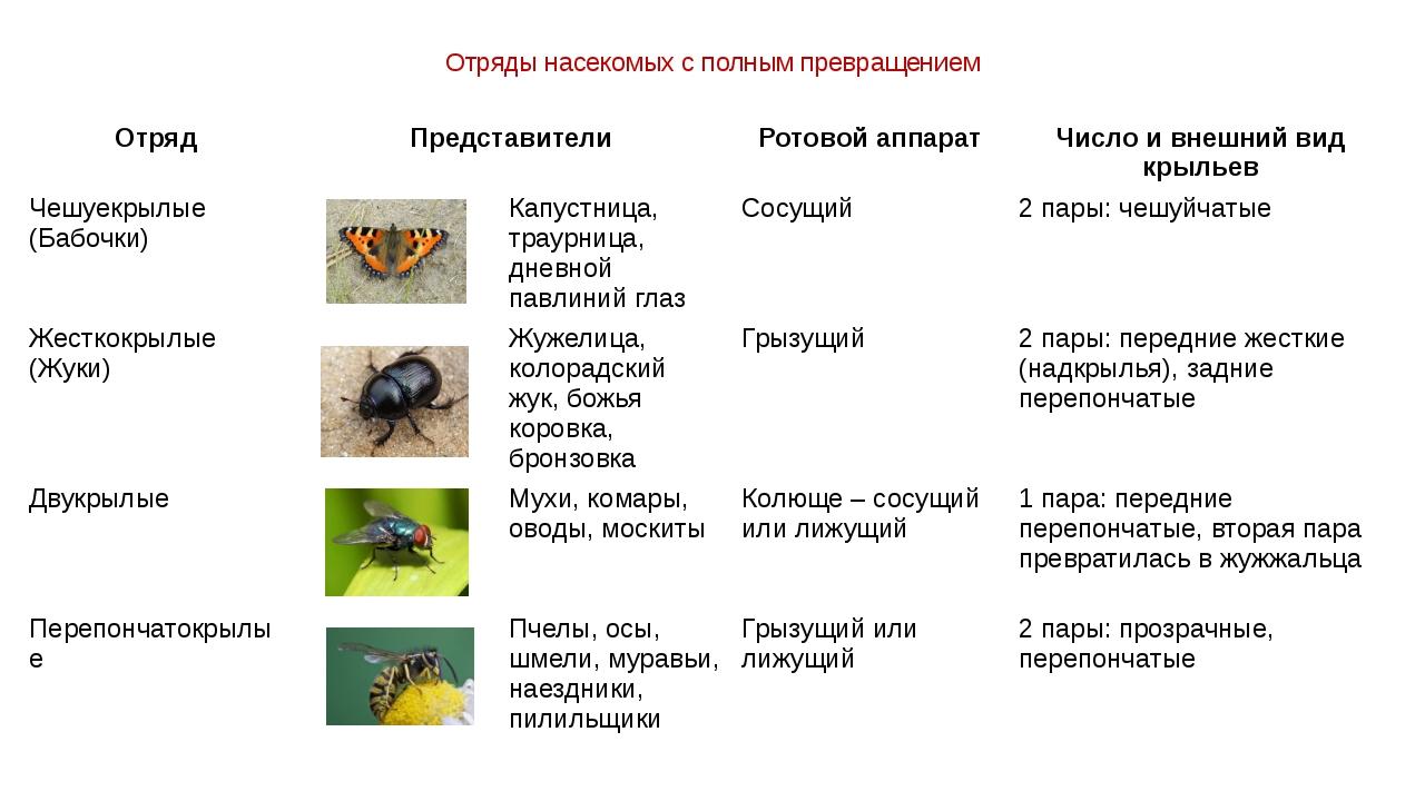 Отряды насекомых с полным превращением Отряд Представители Ротовой аппарат Чи...