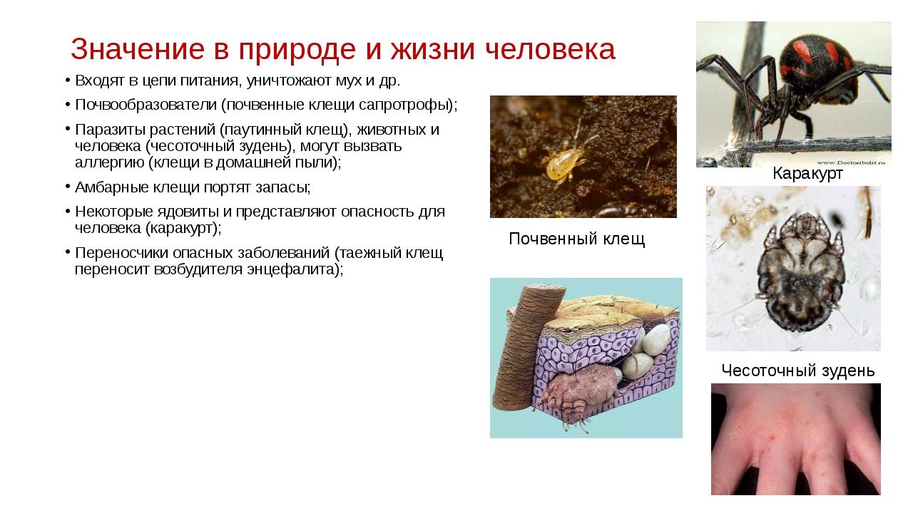 Значение в природе и жизни человека Входят в цепи питания, уничтожают мух и д...