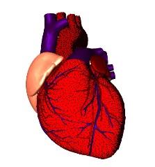 C:\Users\Daycom\Desktop\МЕРОПРИЯТИЕ БИОЛОГИЯ КЛЕТКА\75025495_heartStippled.jpg