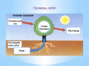 Углекислый газ Кислород Сахар Крахмал Растворённые соли Вода Проверь себя!