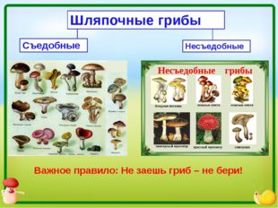 Шляпочные грибы Съедобные Несъедобные Важное правило: Не заешь гриб – не бери!