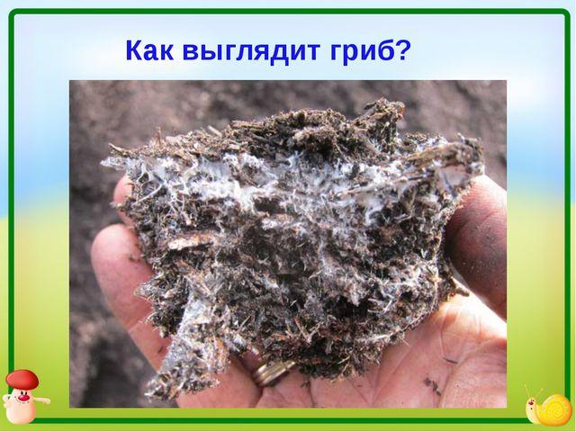 Как выглядит гриб?