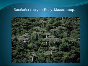 Баобабы к югу от Белу, Мадагаскар.