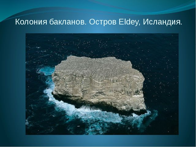 Колония бакланов. Остров Eldey, Исландия.